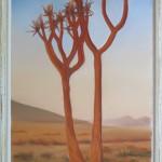 Köcherbaum / 80 x 40 cm / Fr. 620.00